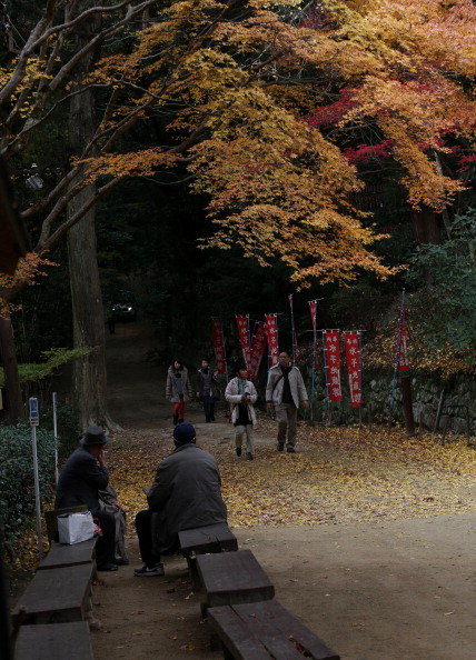Japanese Maple「Shoshazan Engyoji Temple In Autumn Colors」:写真・画像(19)[壁紙.com]