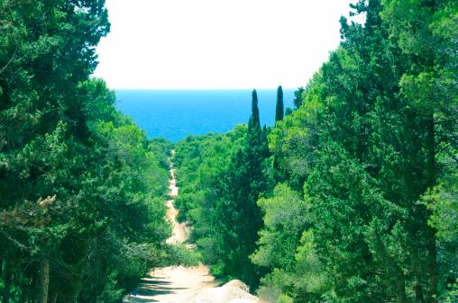 森林「Path to Porto Selvaggio」:スマホ壁紙(12)