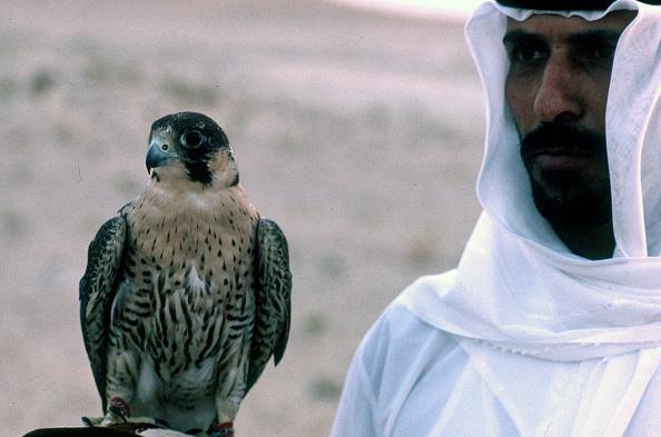 Hawk - Bird「Hawk」:写真・画像(11)[壁紙.com]