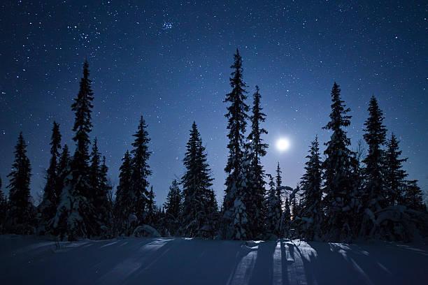 Frozen forest in moonlight, Kiruna, Sweden:スマホ壁紙(壁紙.com)