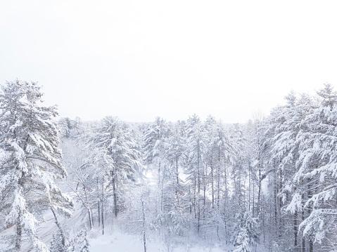 Adirondack Mountains「Frozen Forest」:スマホ壁紙(16)