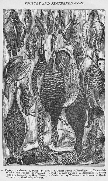 Mrs Beeton「Poultry and Feathered Game, 1907」:写真・画像(8)[壁紙.com]