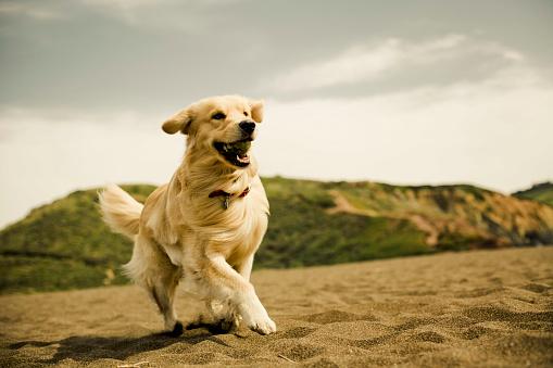 Alertness「Dogs playing on the beach.」:スマホ壁紙(11)