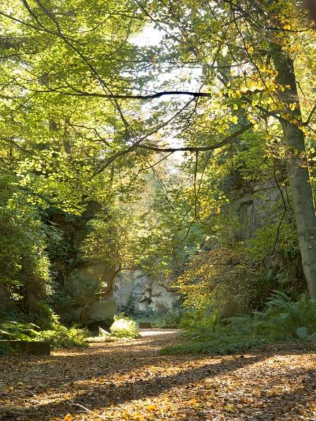 葉・植物「Quarry Garden At Belsay Hall In Autumn」:写真・画像(3)[壁紙.com]