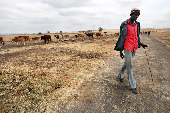 Grass Family「Maasai People Struggle As Kenya Declares Drought Emergency」:写真・画像(8)[壁紙.com]