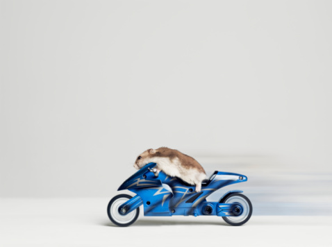 Motorcycle「Hamster sitting on toy motorcycle, side view, studio shot」:スマホ壁紙(2)
