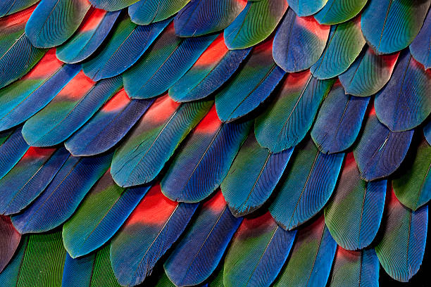 Blue-headed Pionus Tail Feather Design:スマホ壁紙(壁紙.com)