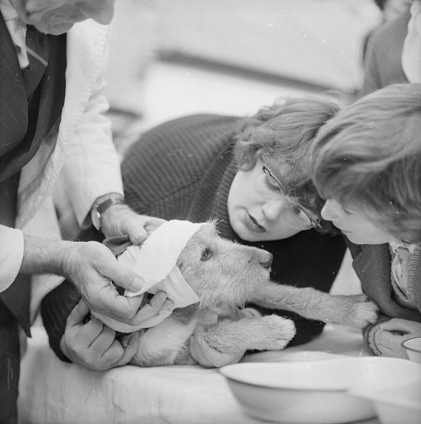 飼育動物「Dog Bandaging」:写真・画像(17)[壁紙.com]