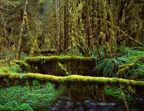 オリンピック雨林「Mossy logs in rainforest」:スマホ壁紙(3)