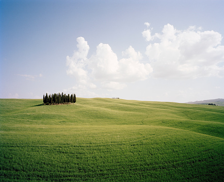 Rolling Landscape「Group of Cypress Trees in green landscape with clouds overhead」:スマホ壁紙(11)