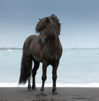 Stallion「Stallion on  Beach」:スマホ壁紙(16)