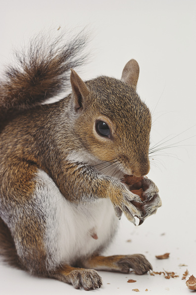 Squirrel「Sammy the Squirrel」:写真・画像(15)[壁紙.com]