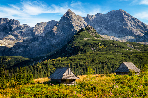 Pasture「Vacations in Poland - Gasienicowa Valley, Tatra Mountains, Poland」:スマホ壁紙(12)