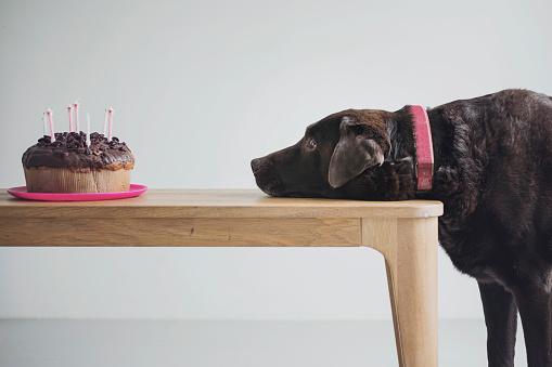 Dessert「Dog eyeing up a Birthday Cake」:スマホ壁紙(5)