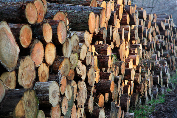 Woodland「Logs waiting collection, Tyne and Wear」:写真・画像(18)[壁紙.com]