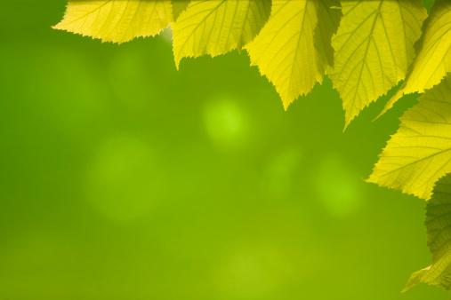 April「foliage background」:スマホ壁紙(9)