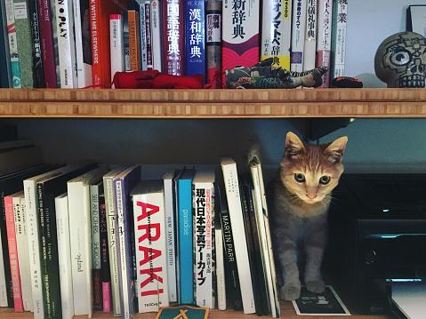 Encinitas「A cat hiding on book shelves.」:スマホ壁紙(19)