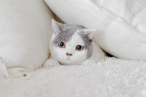 子猫「Cat hiding in pillows」:スマホ壁紙(13)