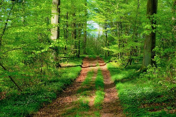Forest greenway:スマホ壁紙(壁紙.com)