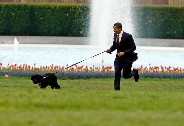 Water「The White House Debuts The Obamas' New Dog Bo, A Portuguese Water Dog」:写真・画像(7)[壁紙.com]