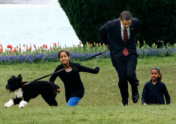 Pet Owner「The White House Debuts The Obamas' New Dog Bo, A Portuguese Water Dog」:写真・画像(16)[壁紙.com]