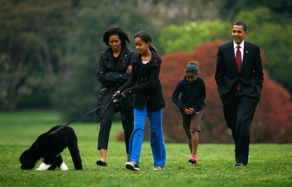 Pet Owner「The White House Debuts The Obamas' New Dog Bo, A Portuguese Water Dog」:写真・画像(14)[壁紙.com]