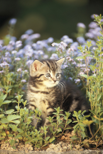 Kitten「Cat between flowers, looking away」:スマホ壁紙(15)