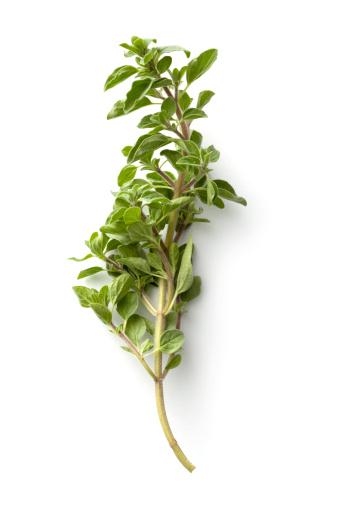 Oregano「Fresh Herbs: Oregano Isolated on White Background」:スマホ壁紙(3)