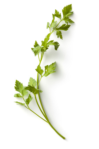 Cilantro「Fresh Herbs: Parsley」:スマホ壁紙(6)