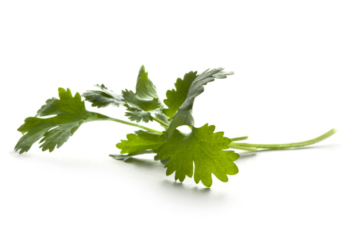 Cilantro「Fresh Herbs: Cilantro Isolated on White Background」:スマホ壁紙(8)