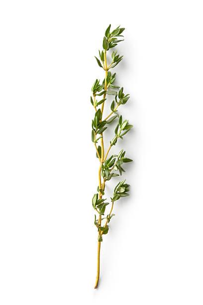 Fresh Herbs: Thyme:スマホ壁紙(壁紙.com)