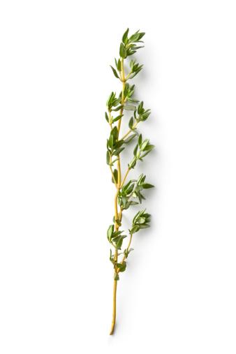 Thyme「Fresh Herbs: Thyme」:スマホ壁紙(9)