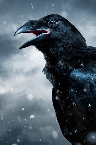 Winter「クロウ」:スマホ壁紙(3)