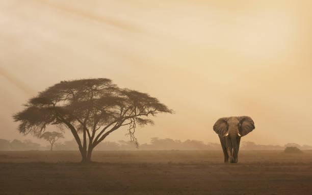 Elephant at sunset:スマホ壁紙(壁紙.com)