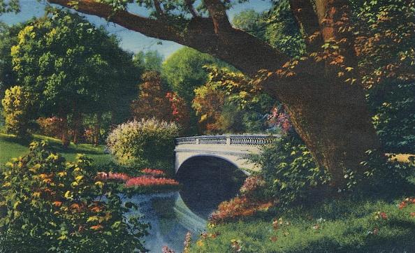 葉・植物「Bridge No 5」:写真・画像(17)[壁紙.com]
