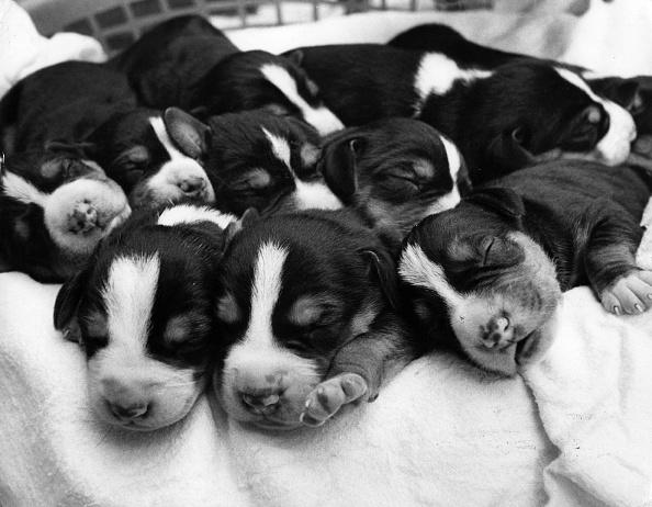 可愛らしい「Metric Pups」:写真・画像(11)[壁紙.com]