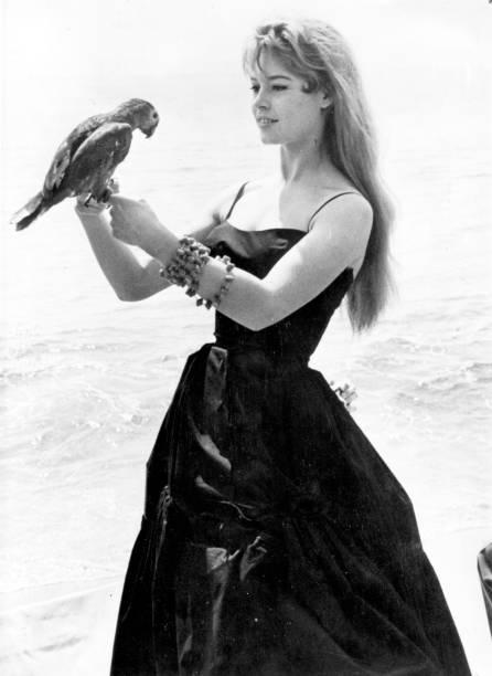 Brigitte With Polly:ニュース(壁紙.com)