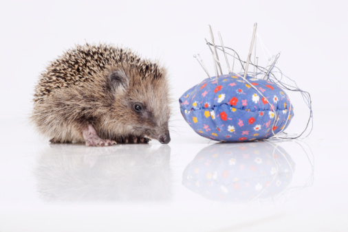 Hedgehog「Hedgehog with pincushion on white background」:スマホ壁紙(1)