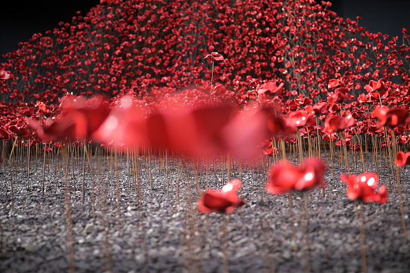 Poppy - Plant「Wave And Weeping Window Poppy Installation On Display At The Imperial War Museum North」:写真・画像(13)[壁紙.com]