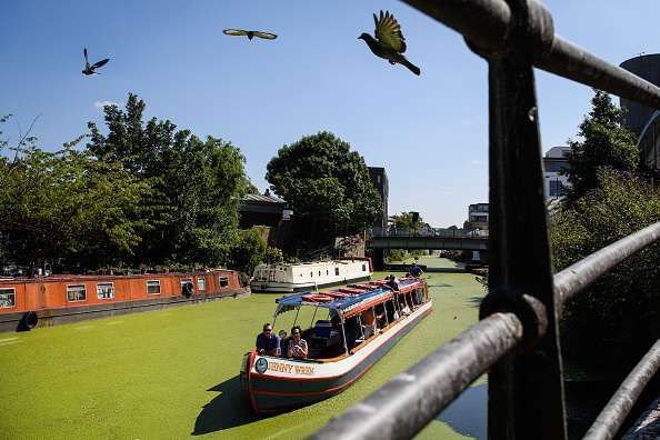 Canal「Hot Weather Causes Explosion Of Brilliant Green Duckweed On The Regent Canal」:写真・画像(17)[壁紙.com]