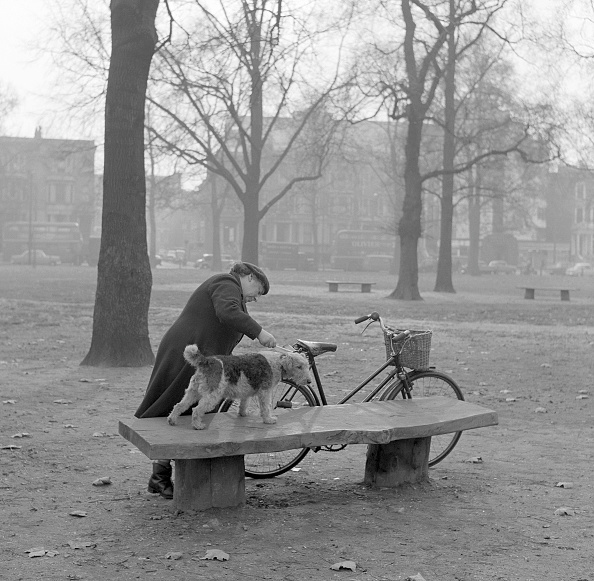 Bench「Woman grooming dog on a park bench」:写真・画像(16)[壁紙.com]