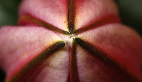 一輪の花「Chelsea Flower Show In Close Up」:写真・画像(16)[壁紙.com]