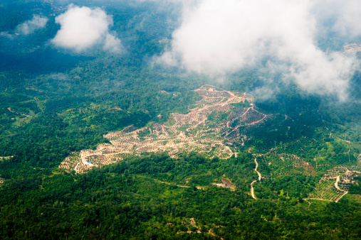 Deforestation「Clear cutting and plantation of oil palms in rainforest area near Mulu National Park.」:スマホ壁紙(3)