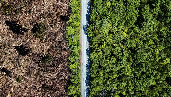 Lumber Industry「Clear Cutting Border」:スマホ壁紙(11)