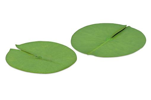 Water Lily「Lotus leaf」:スマホ壁紙(4)