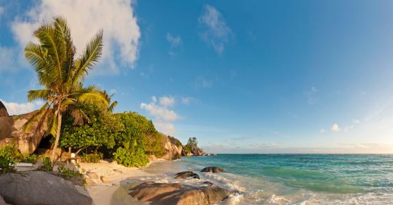 Frond「Idyllic tropical island beach palm trees warm surf golden sands」:スマホ壁紙(7)