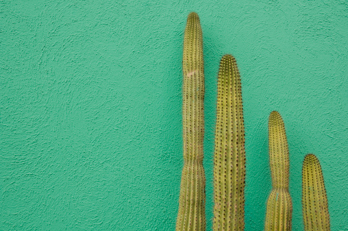 Green Background「Green Wall and Cactus」:スマホ壁紙(9)