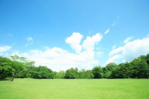 Lawn「Park, Kyoto City, Kyoto Prefecture, Honshu, Japan」:スマホ壁紙(14)