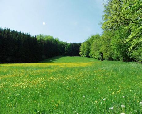 月「緑色黄 meadow 森に囲まれています。」:スマホ壁紙(13)