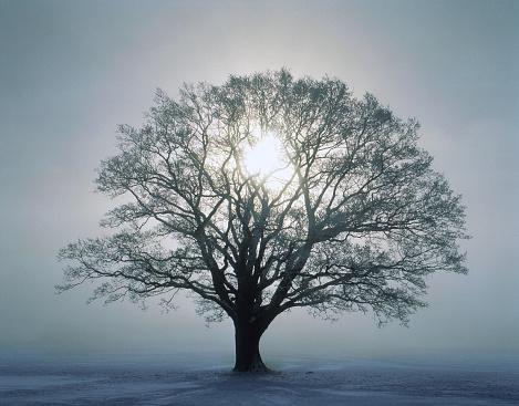 Single Tree「Tree and sunrise」:スマホ壁紙(17)